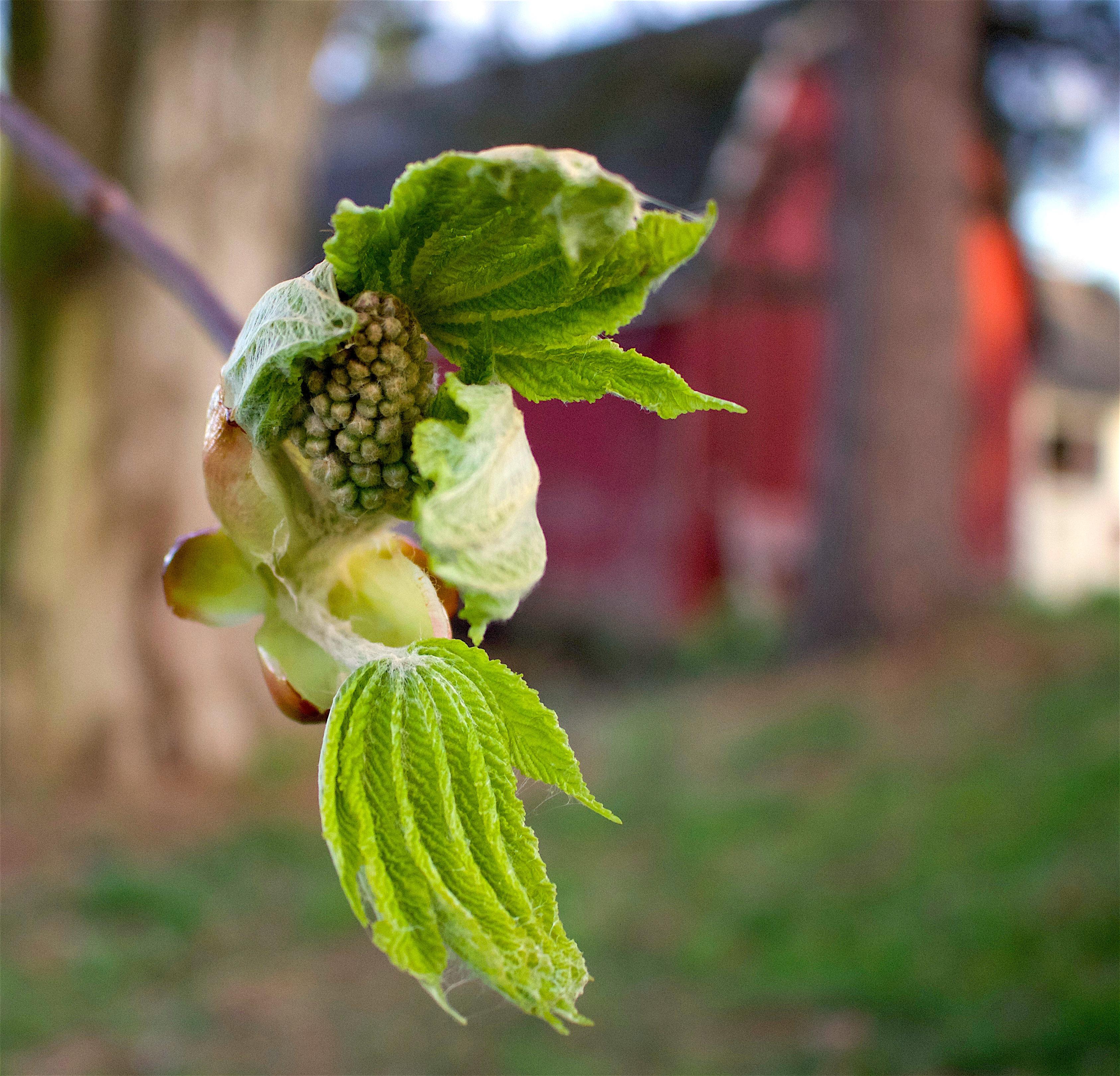chestnutspring9