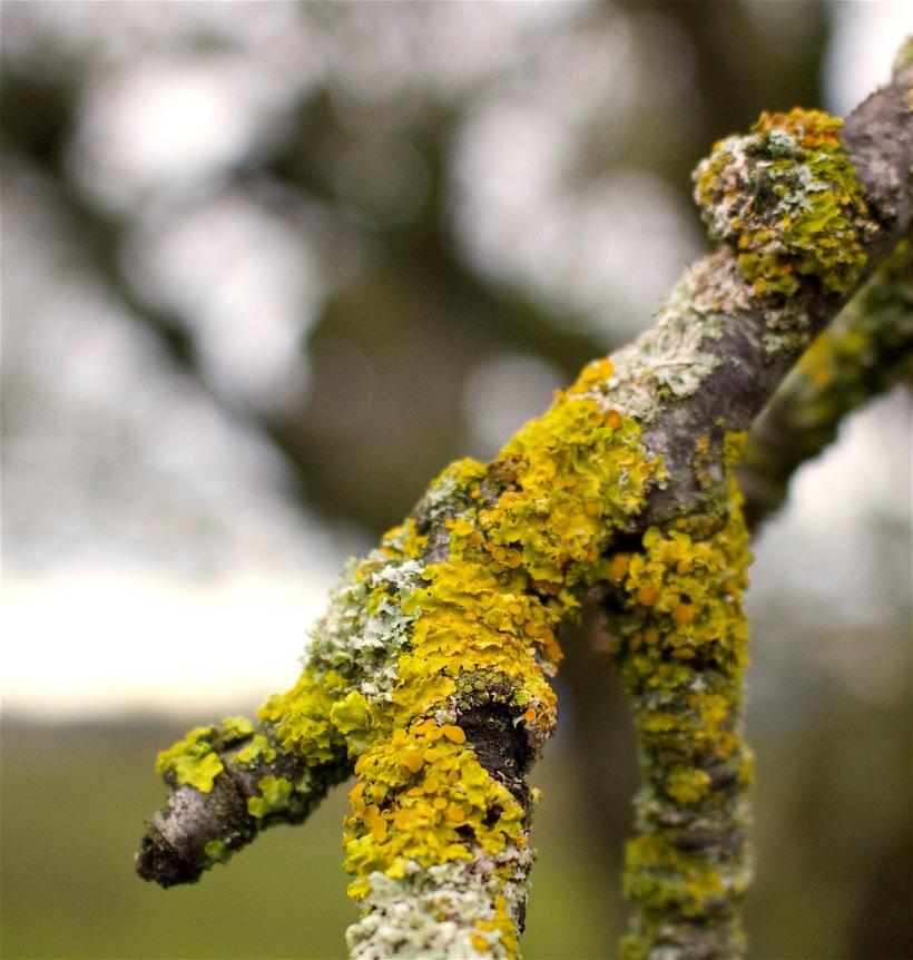 lichen12316