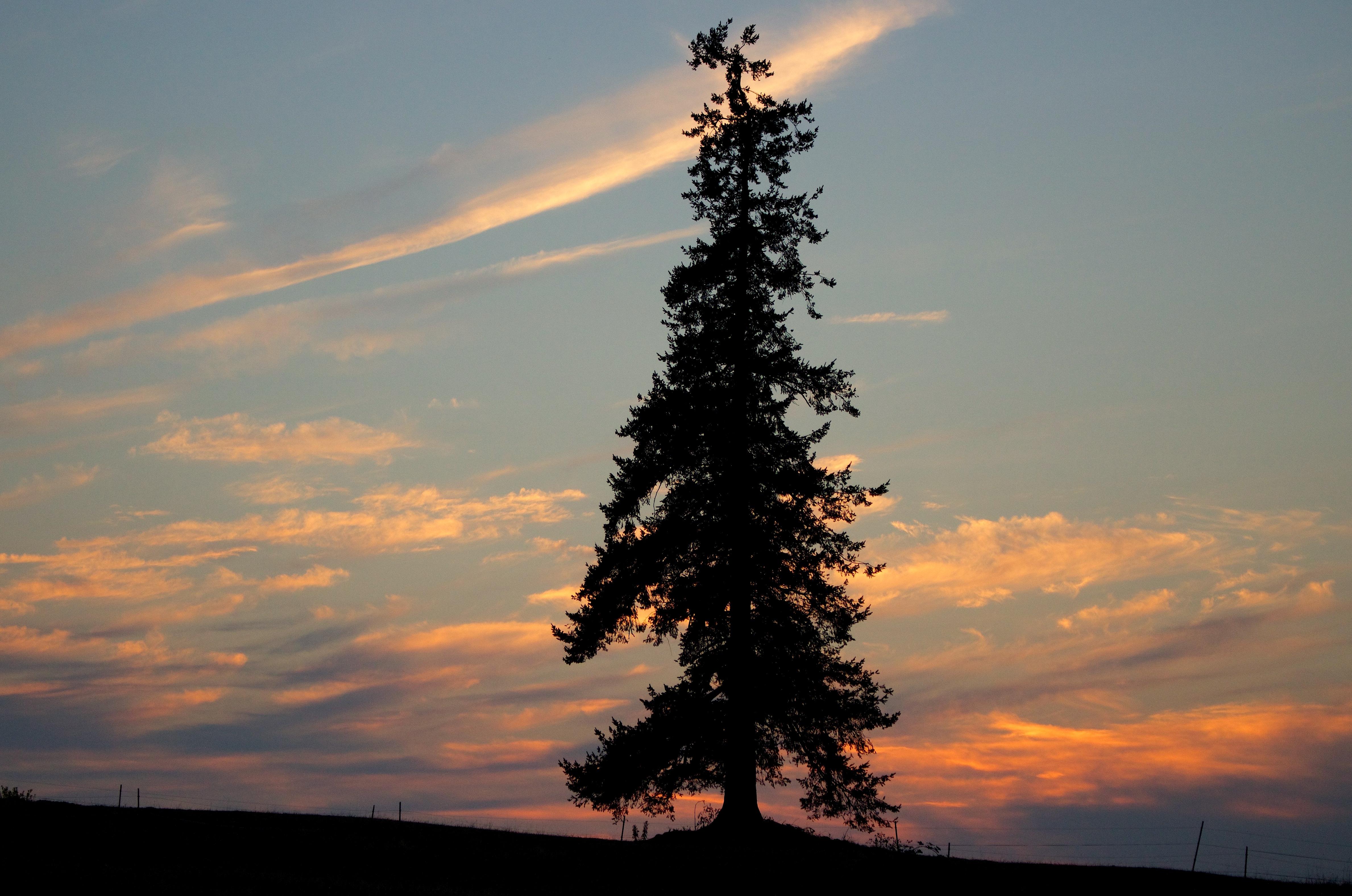 sunset813151