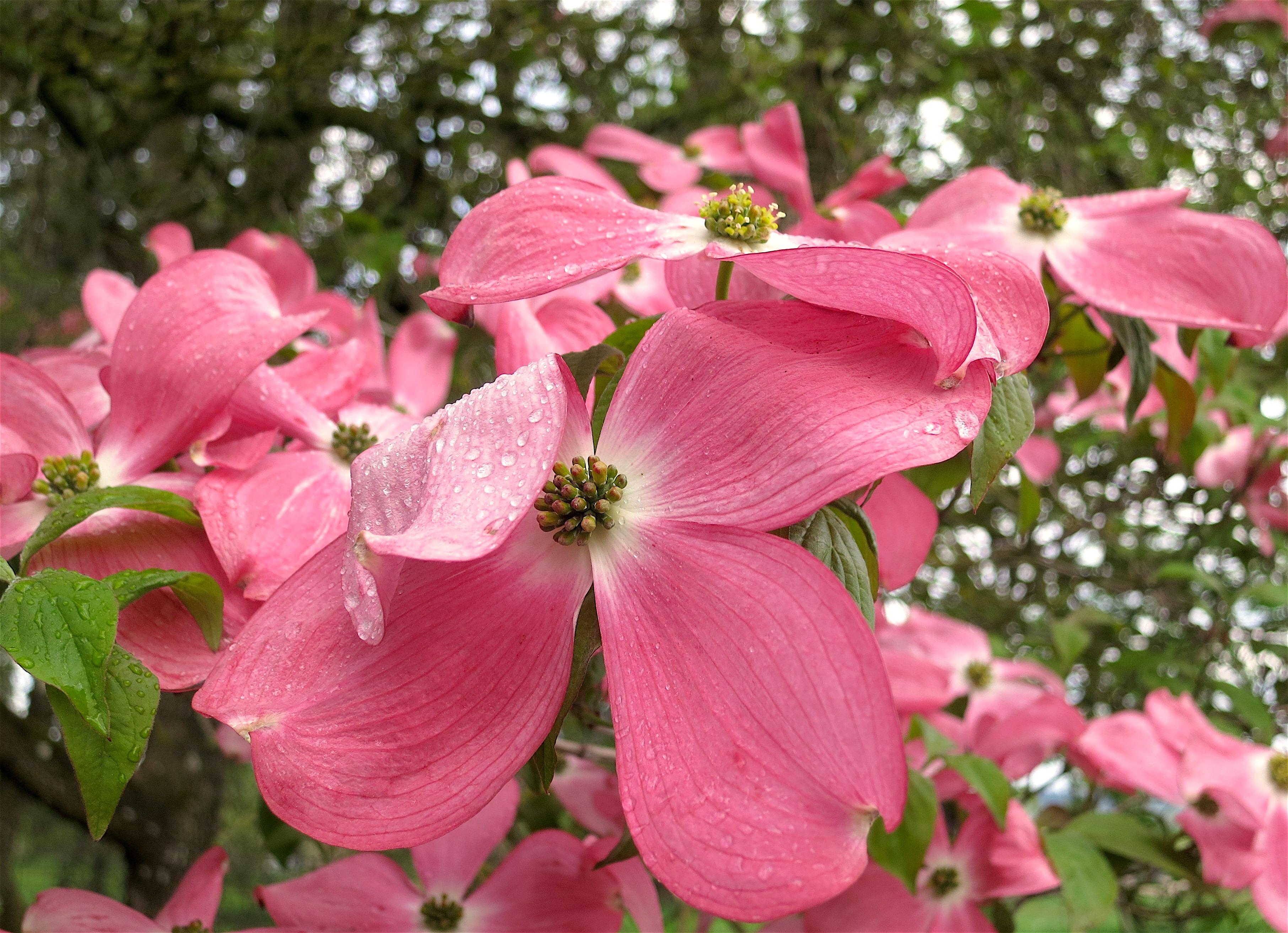 pinkrain2