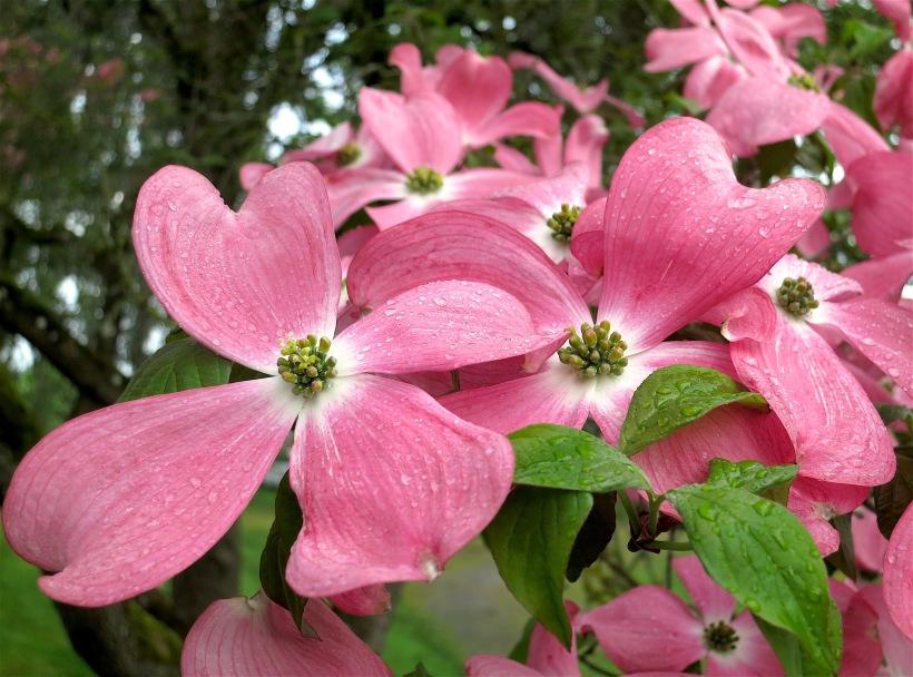 pinkrain3