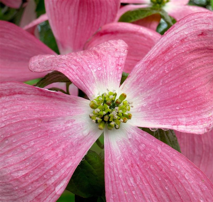 pinkrain4
