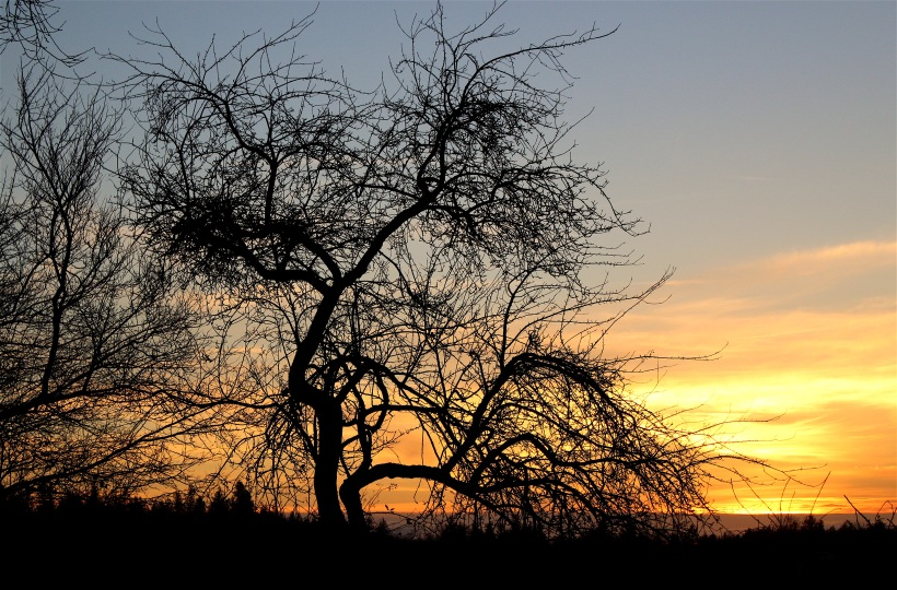 sunset26161