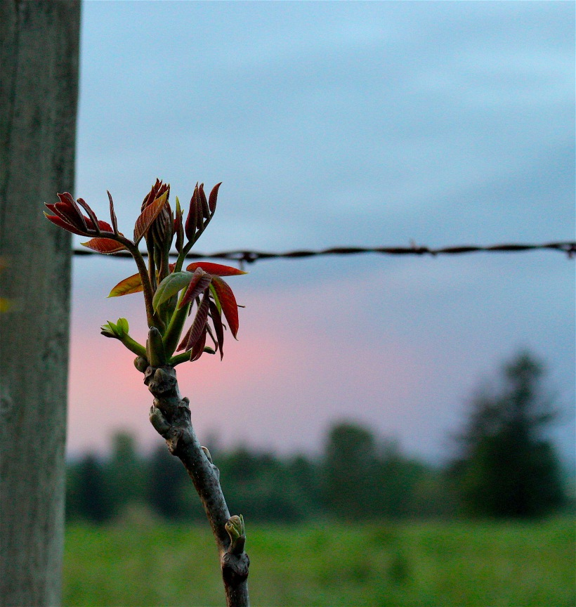 sunsetshoot3