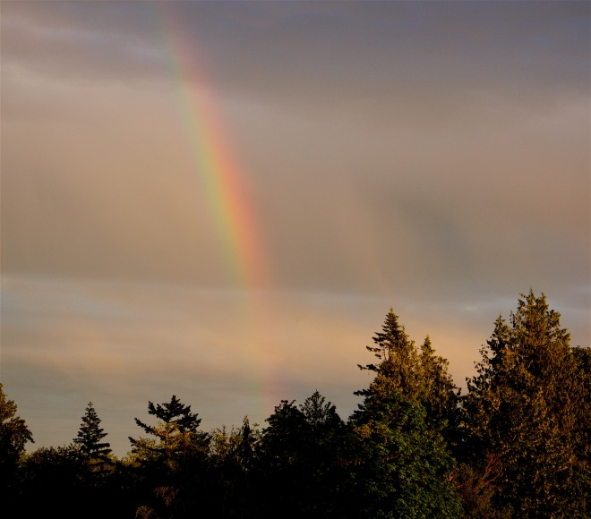 rainbow51116