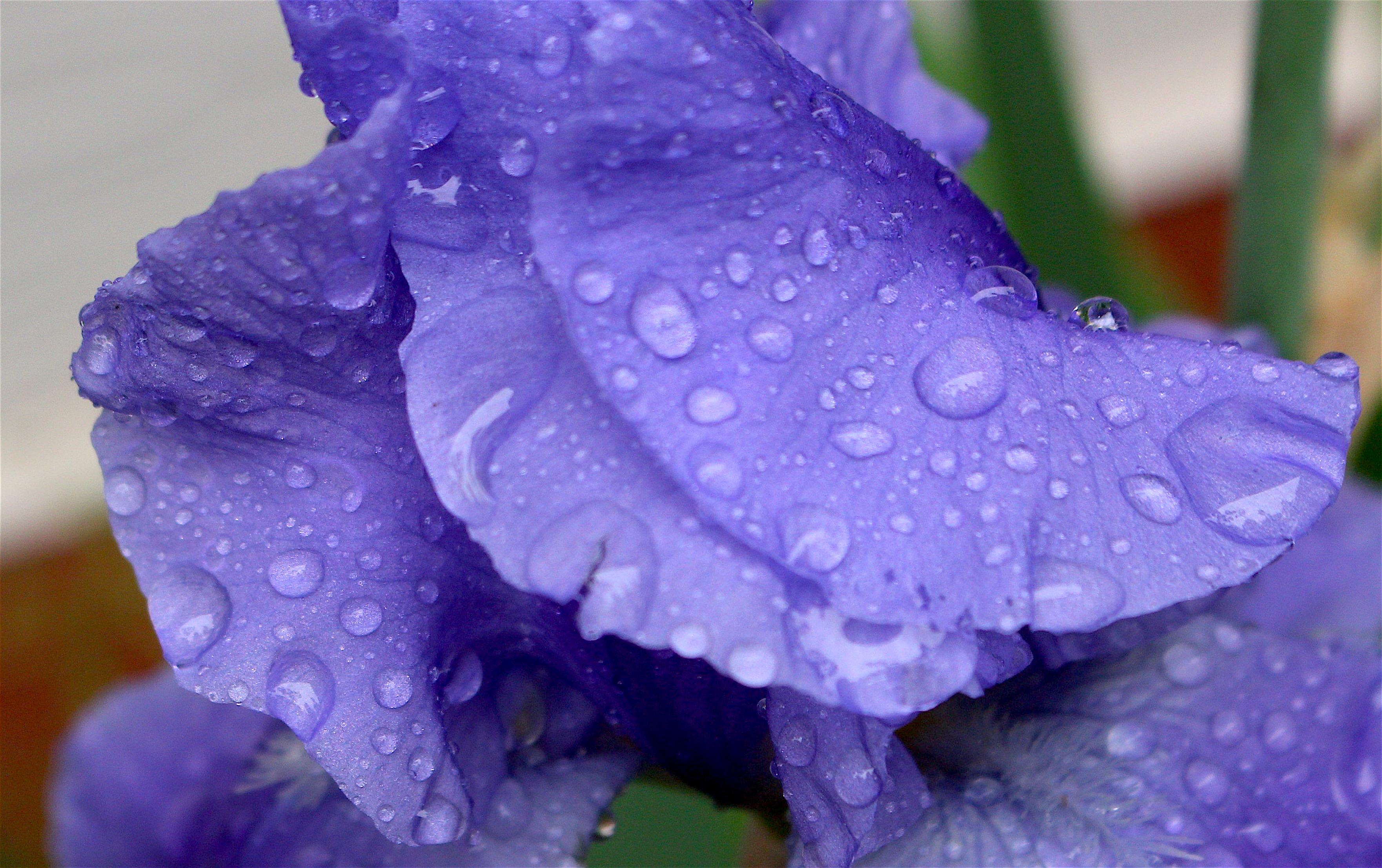 rainyiris2