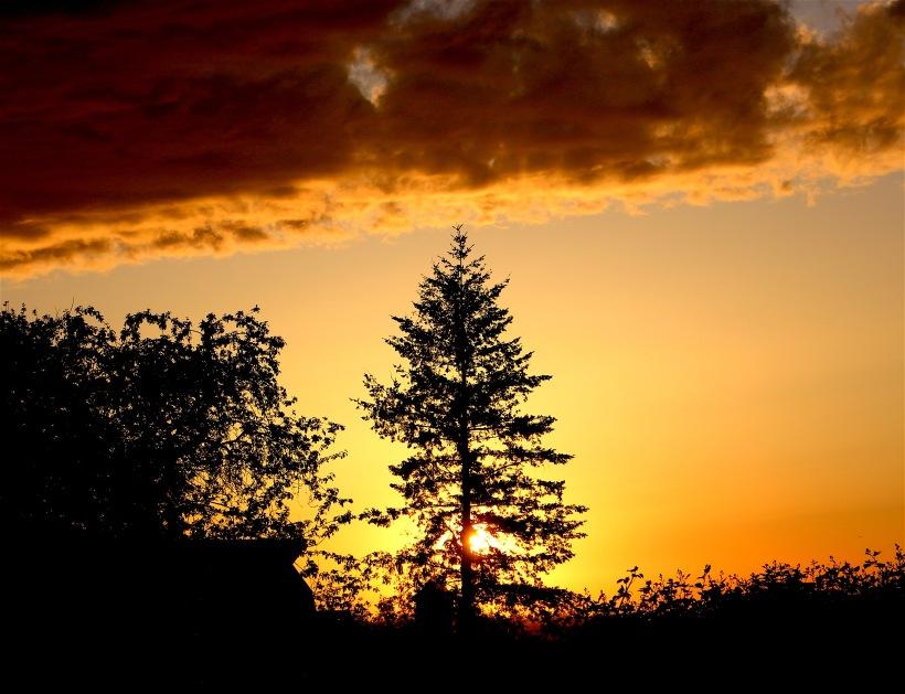 sunset51116
