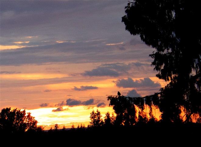 sunsetwitness