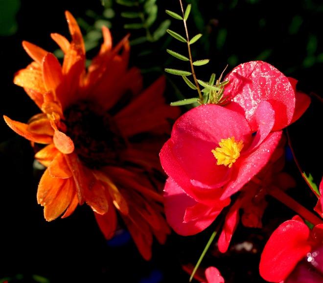 dewyflowers