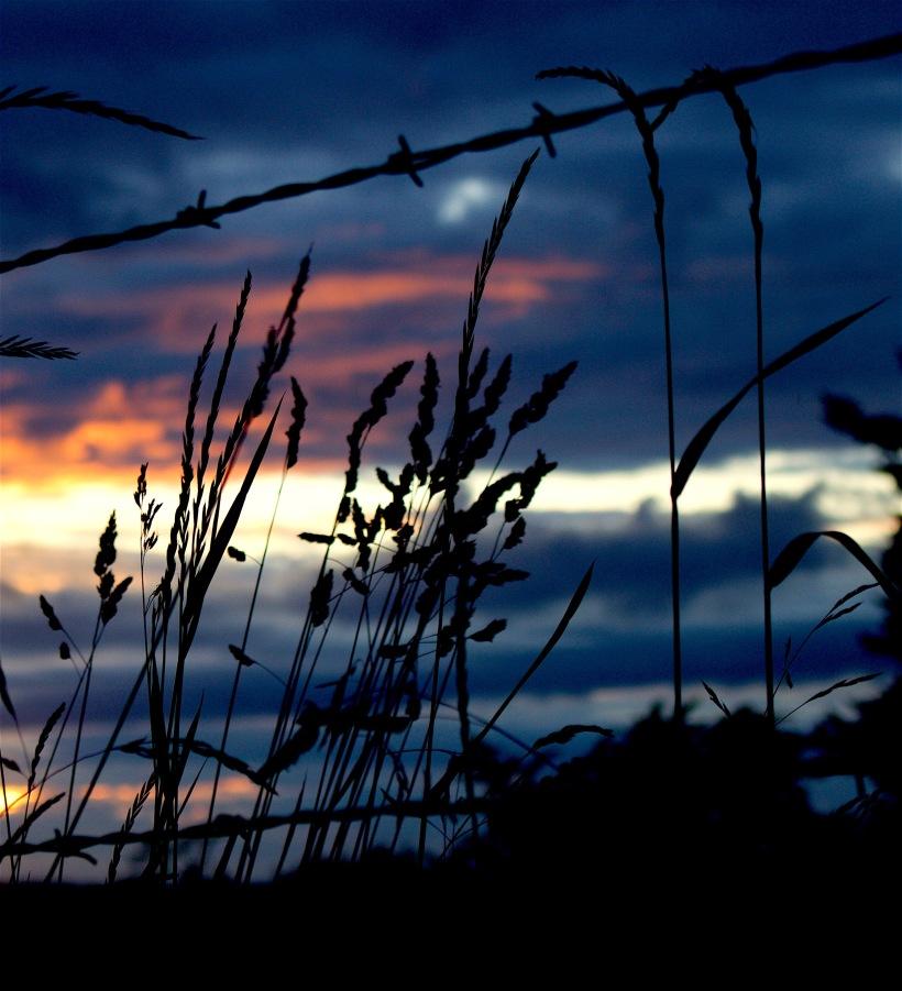 sunset611165