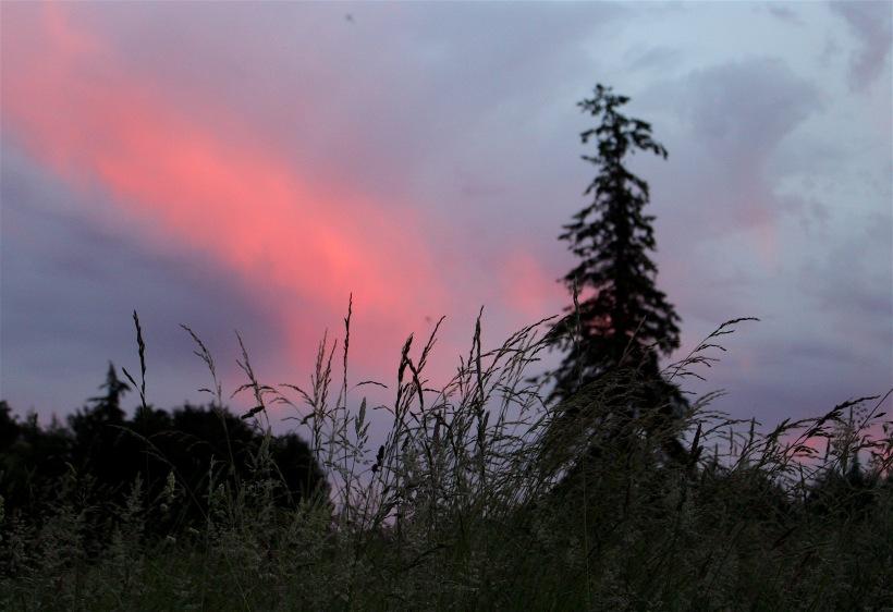 sunset67164