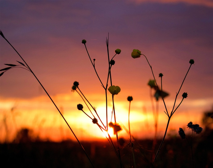 sunset69164