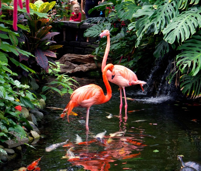 flamingobutterfly