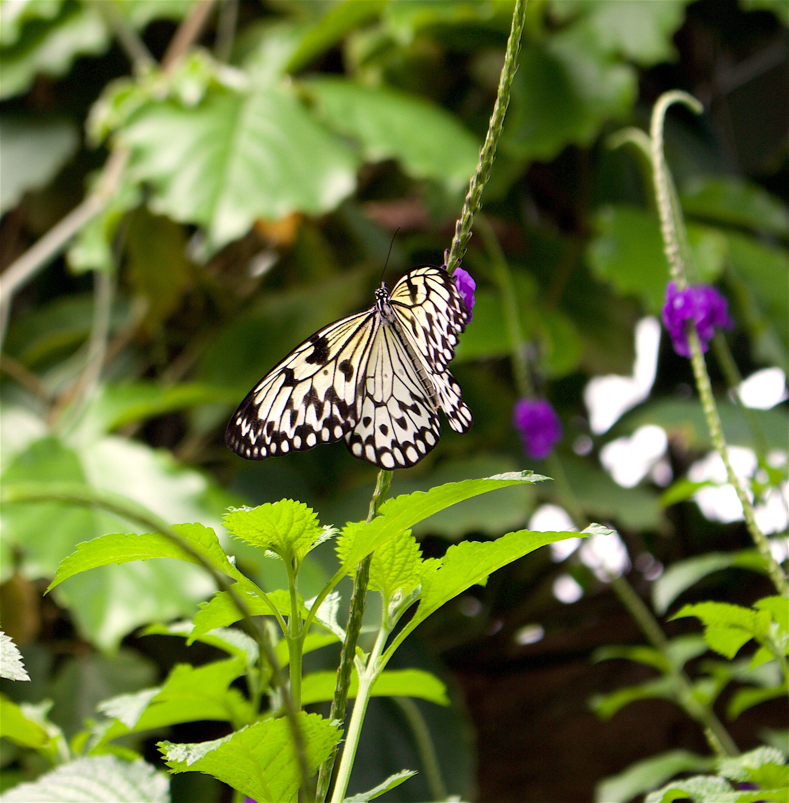 butterflygarden2