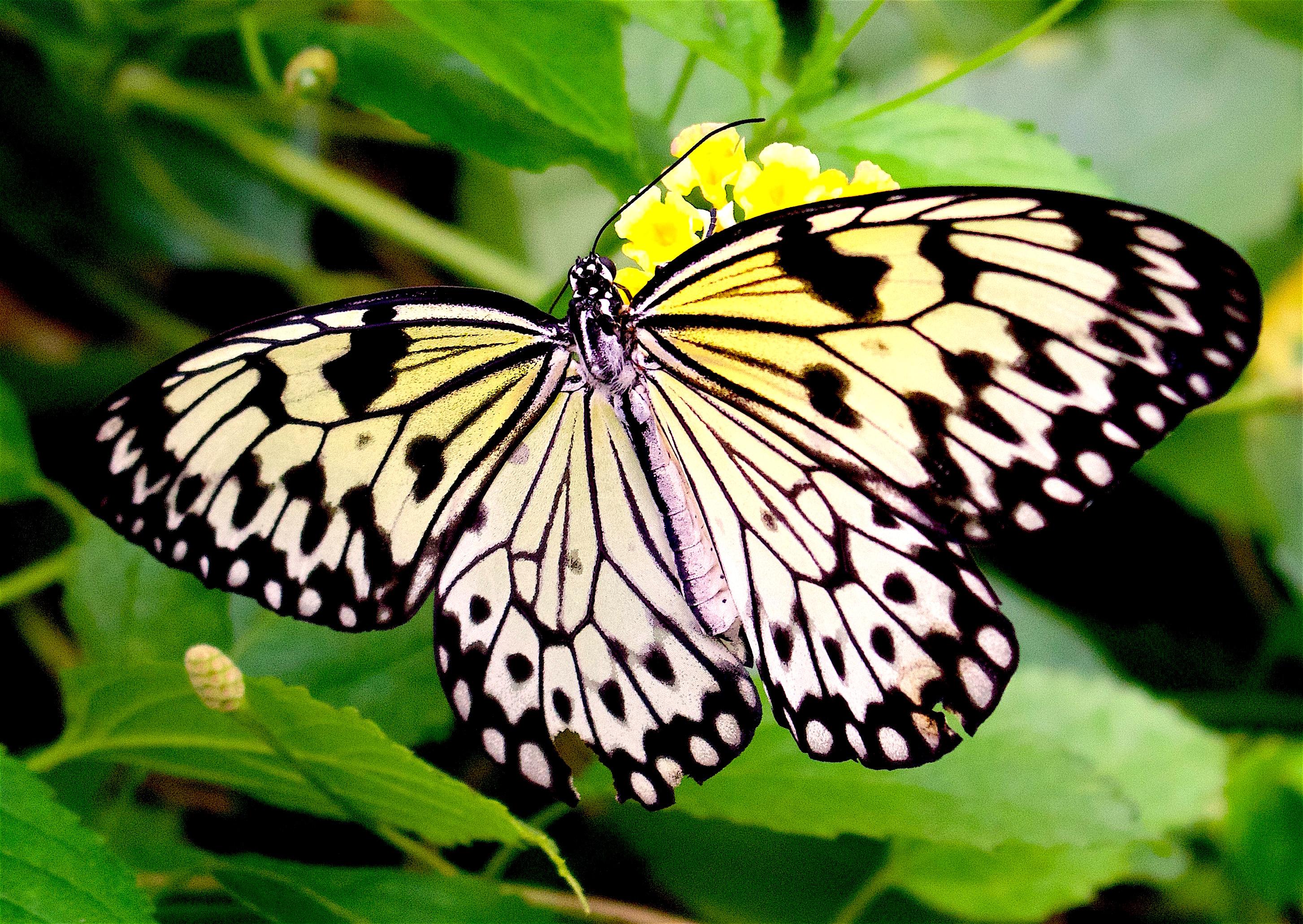 butterflygarden5