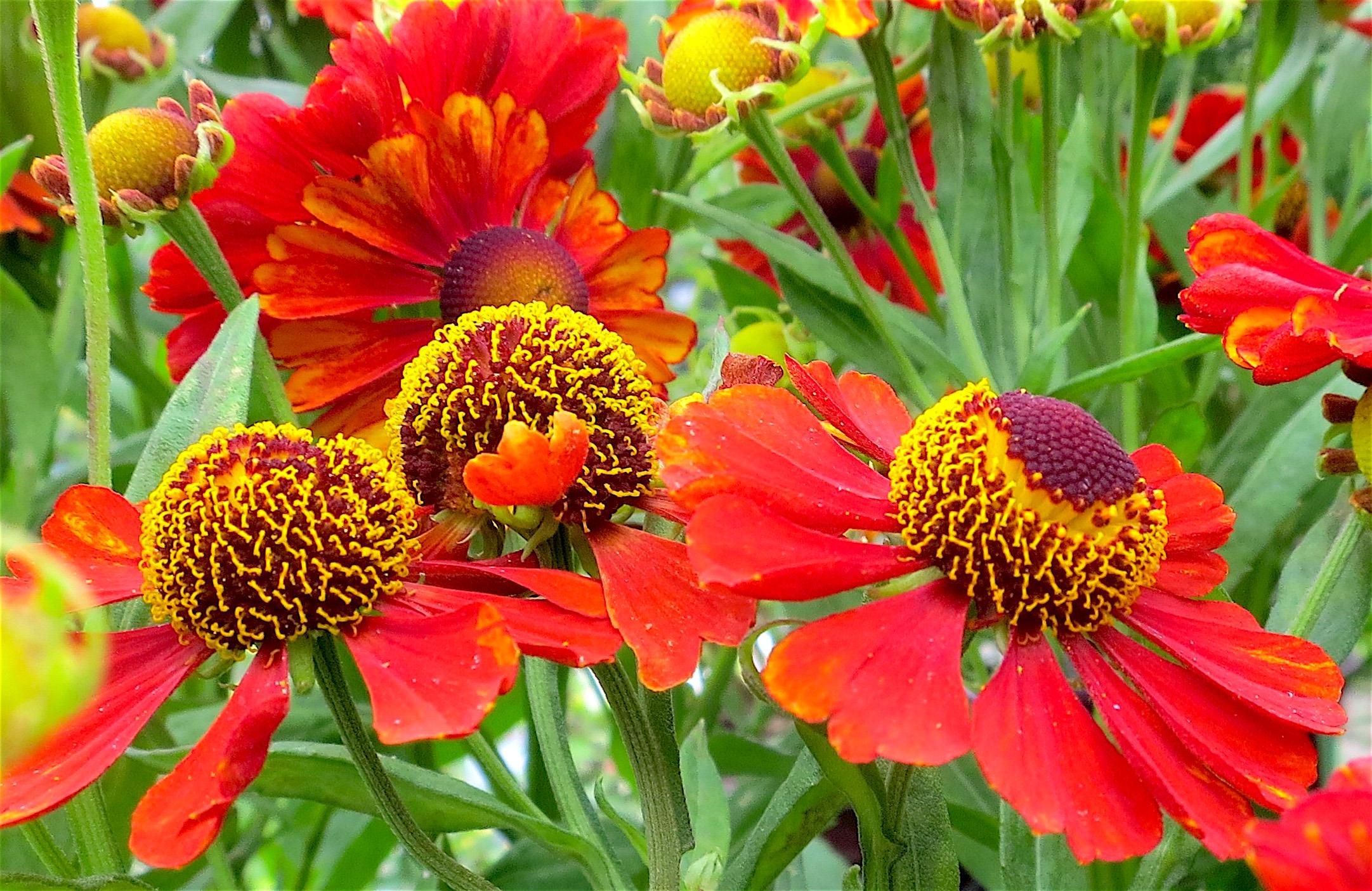 gardenspot1