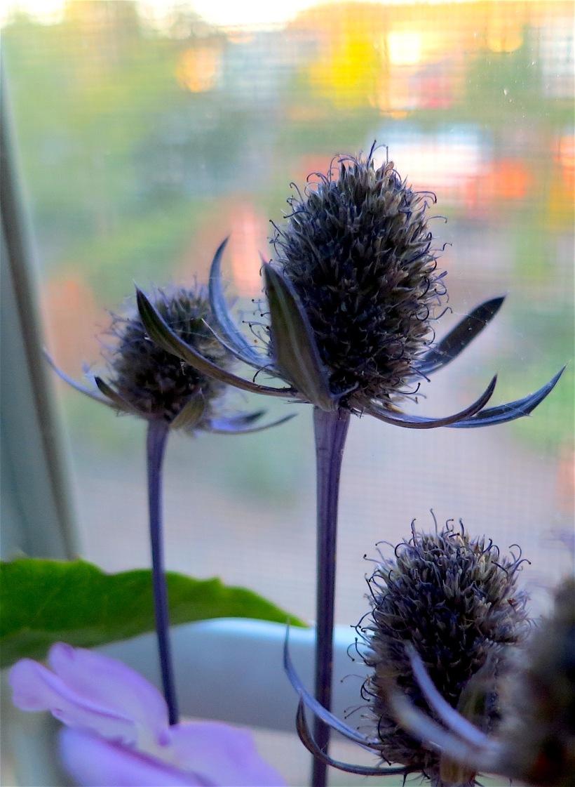 johnflowers