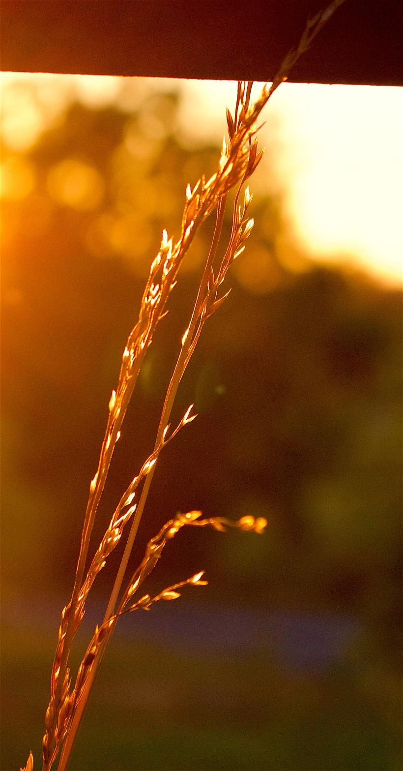 litgrasses