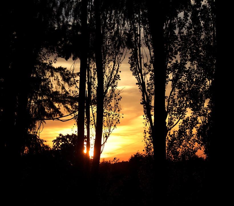 sunset825166