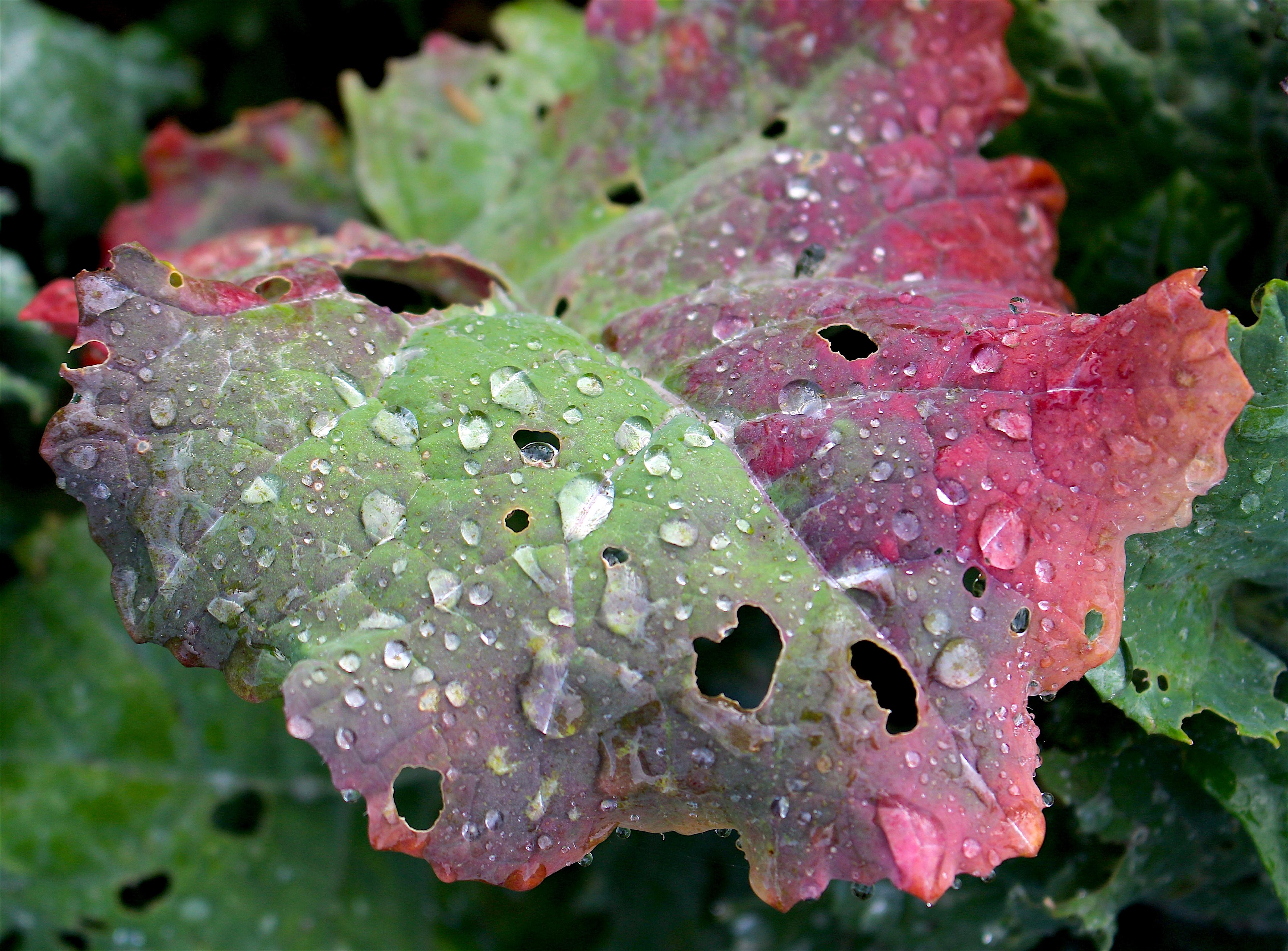 rainykale4