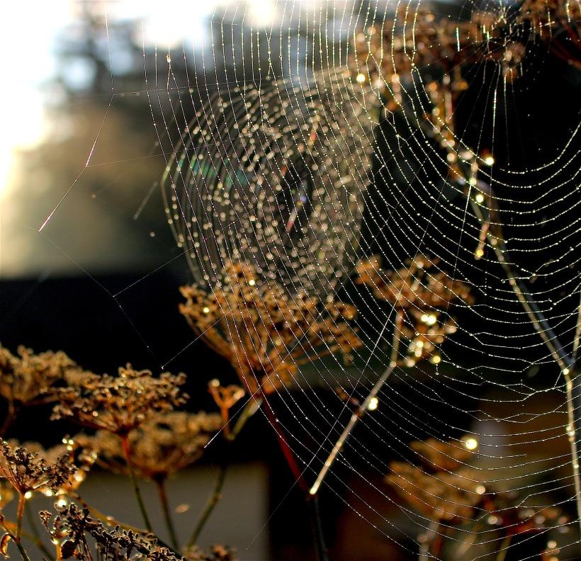webs7