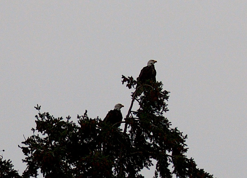 eaglecouple2