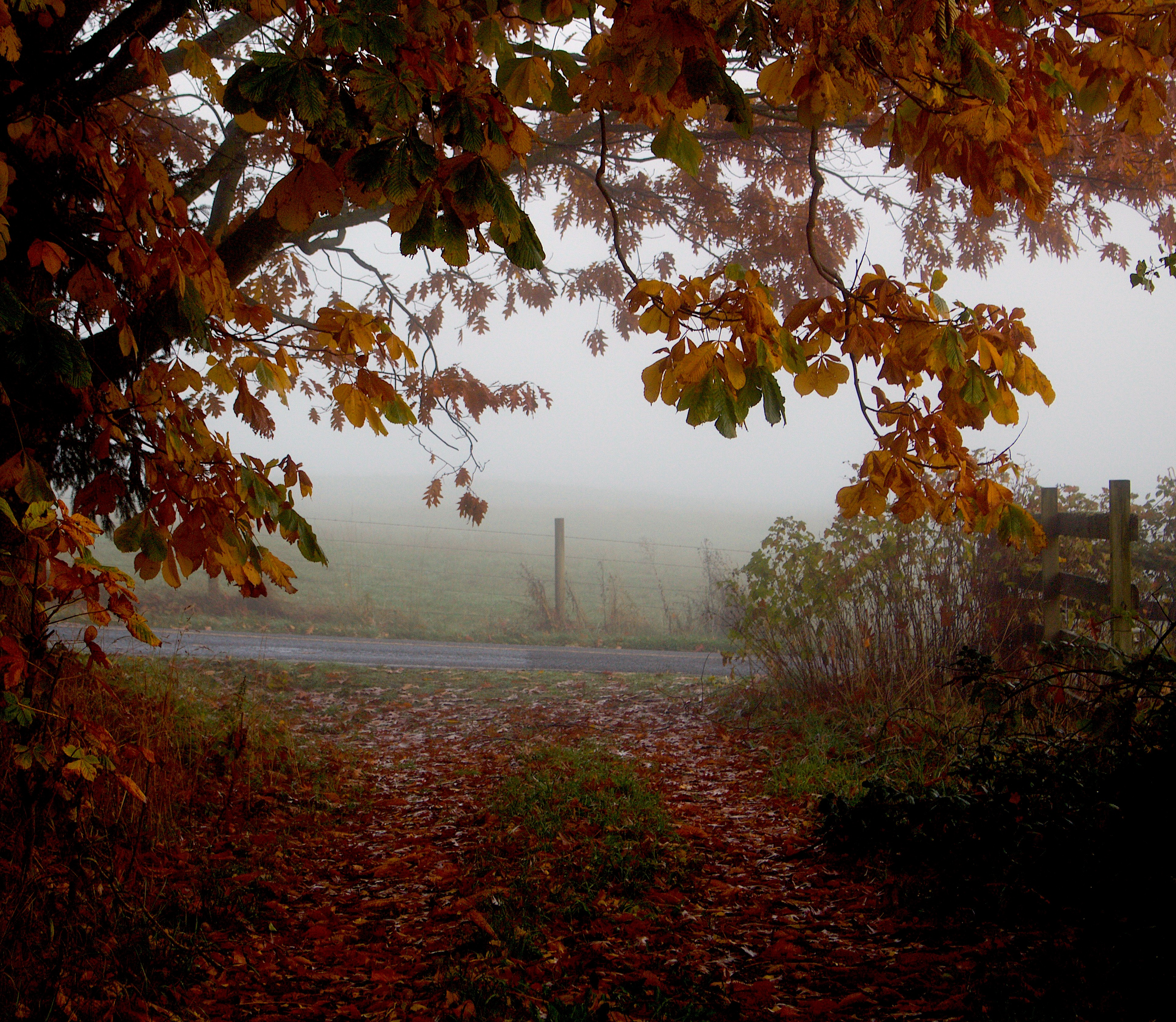 fogdriveway