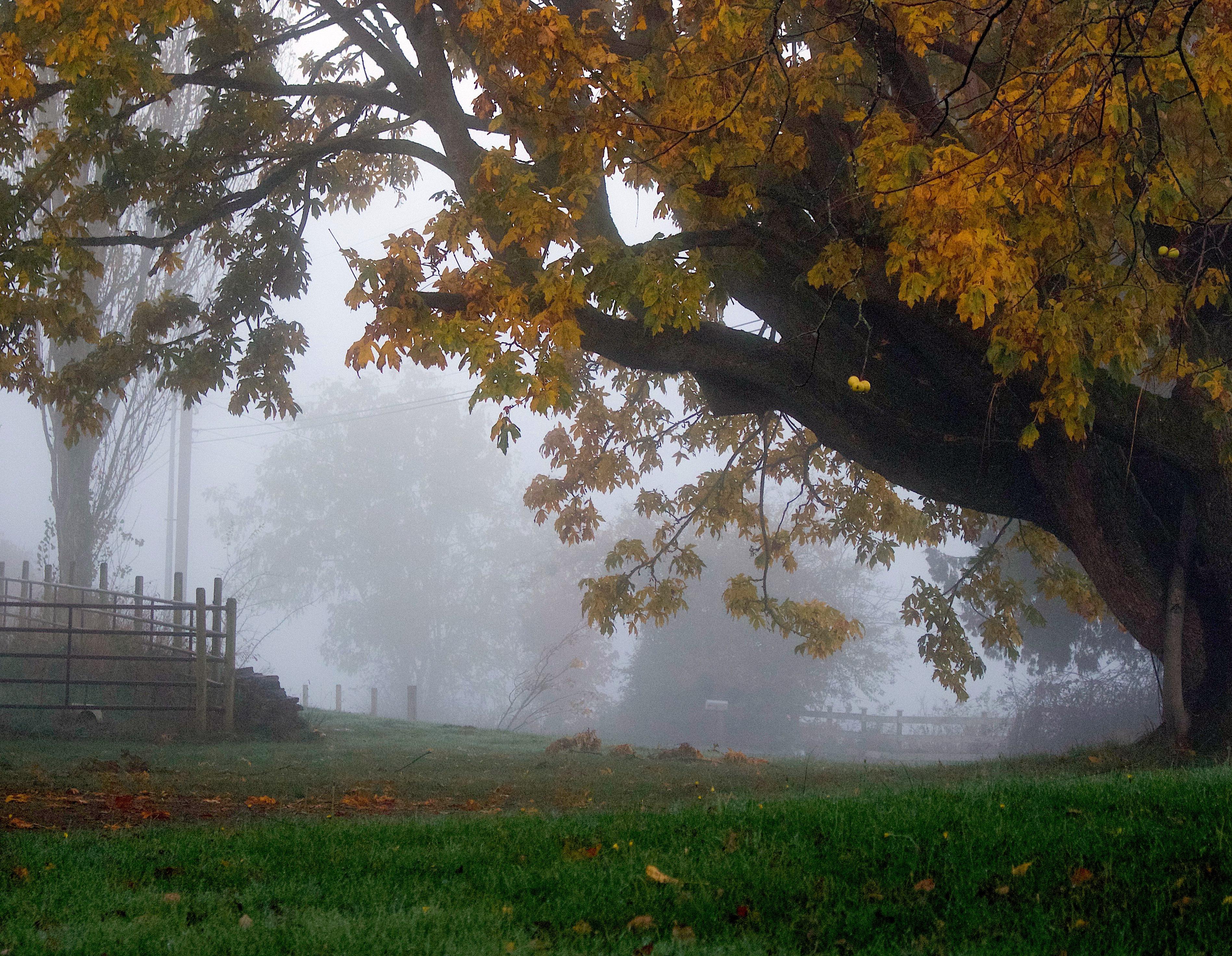 foggyfrontyard