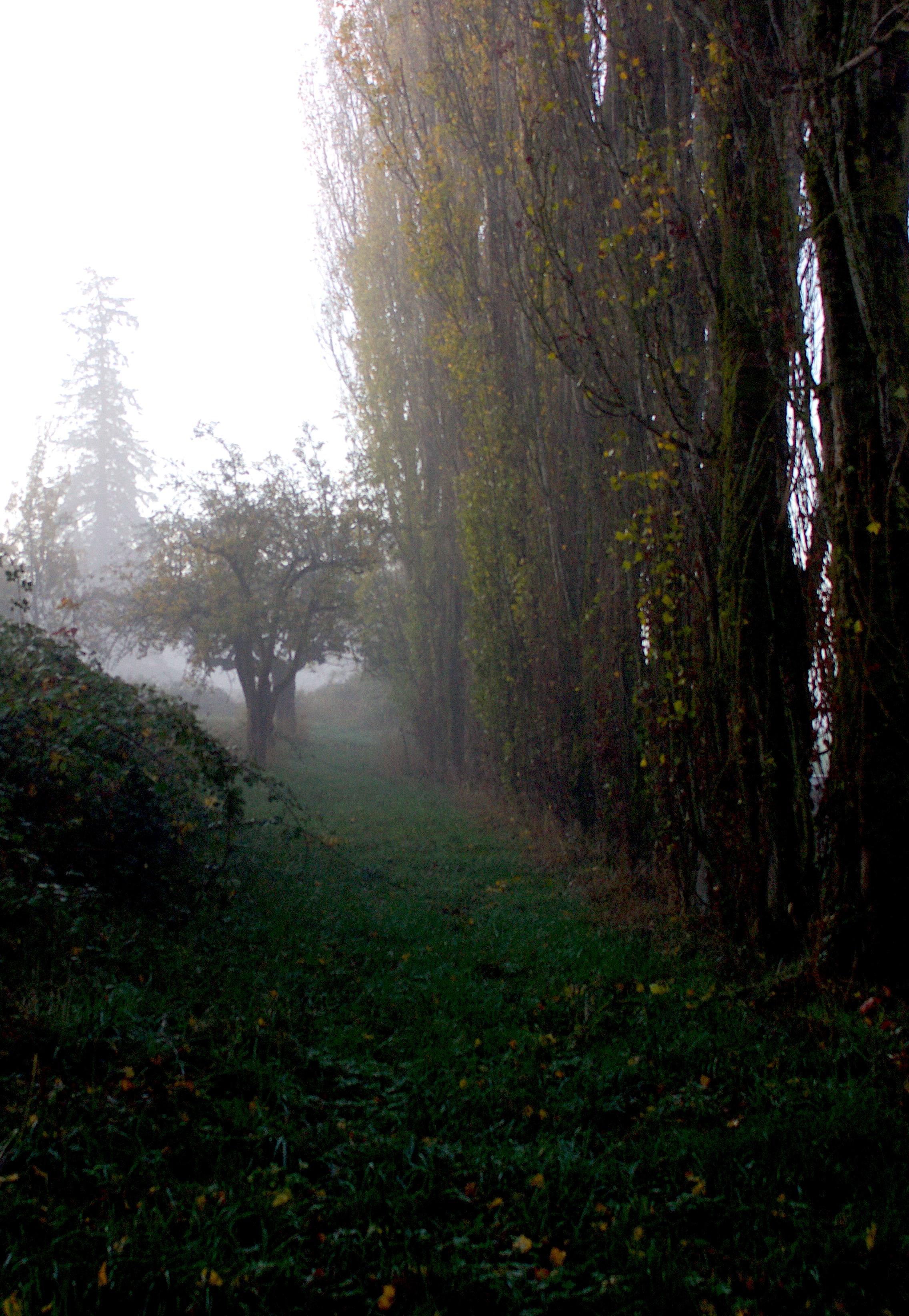 fogmorning2