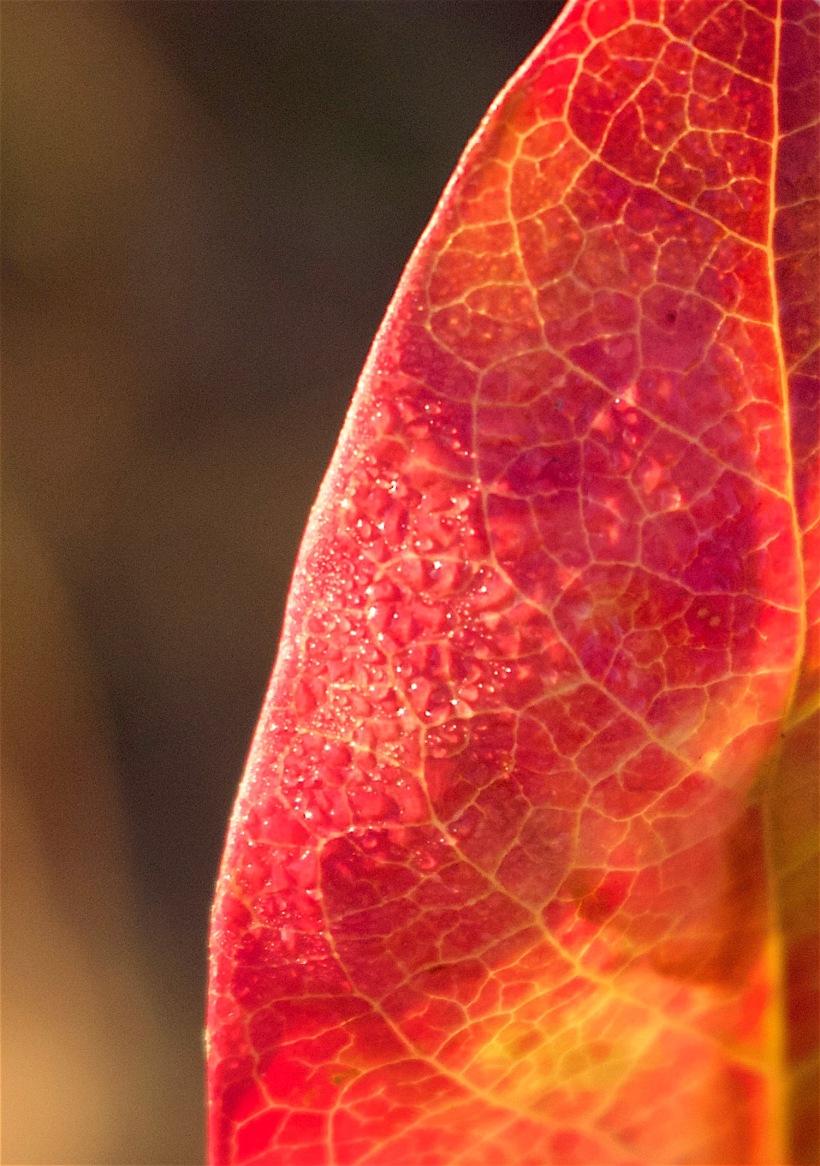 leafdewy
