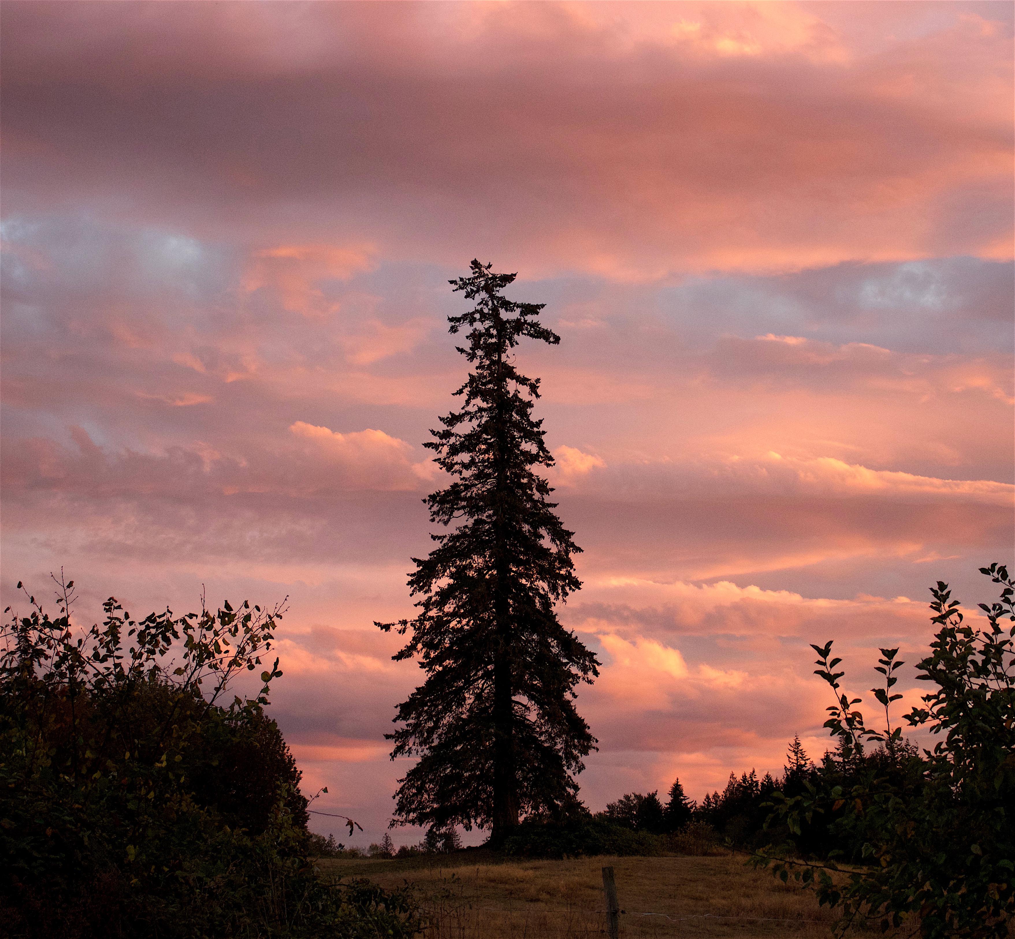 sunset917162