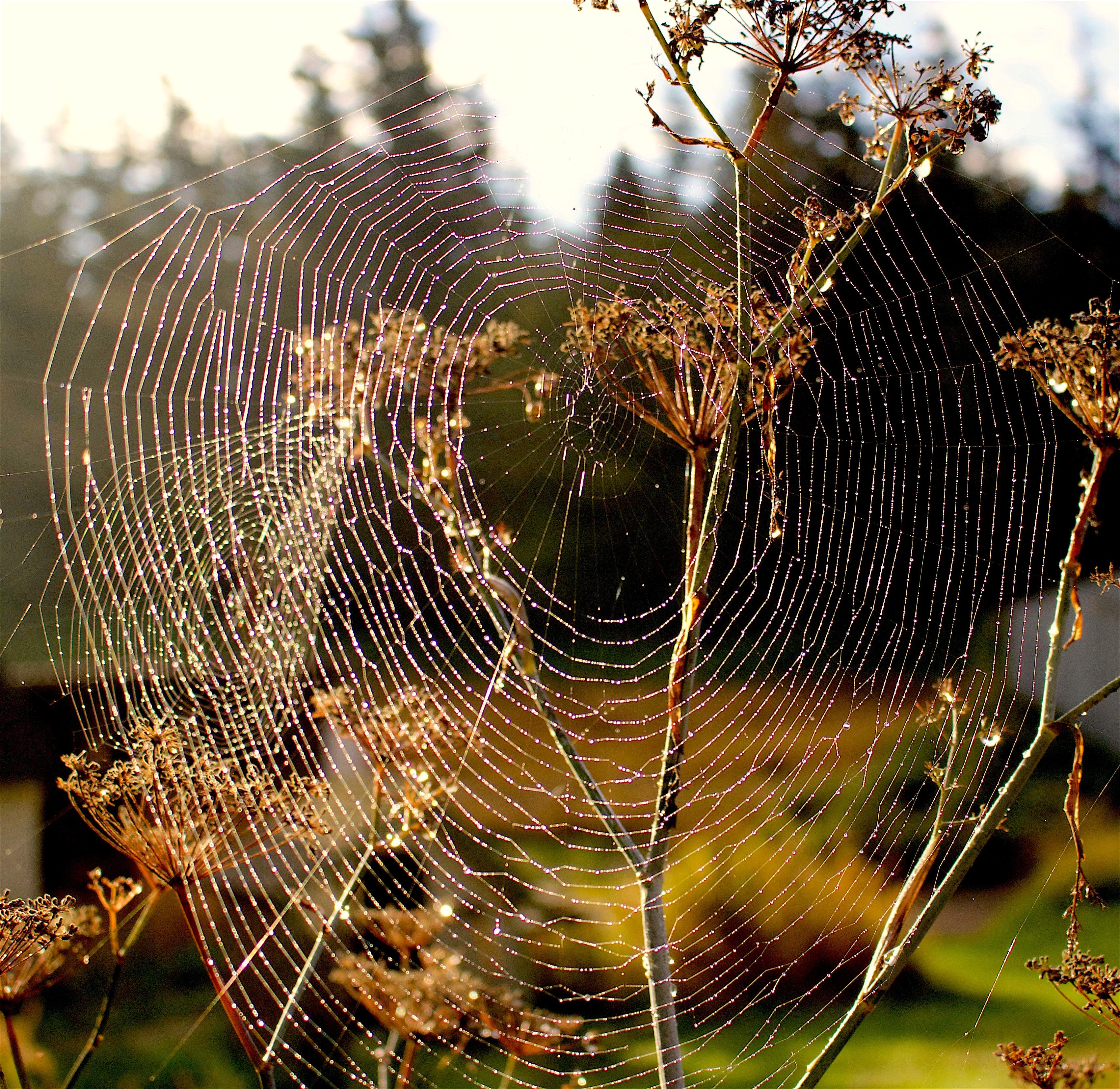 webs2