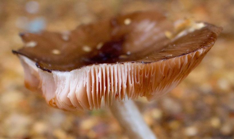 fungi115164