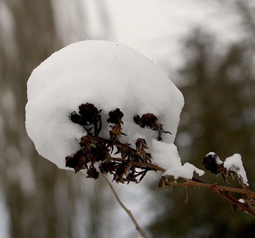 blackberrysnowball