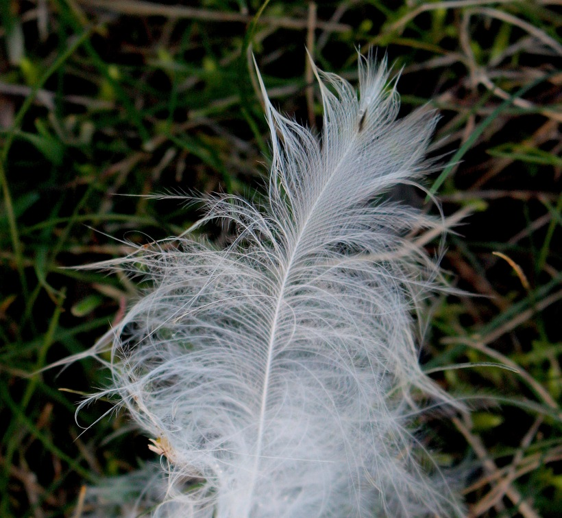 fieldfeather