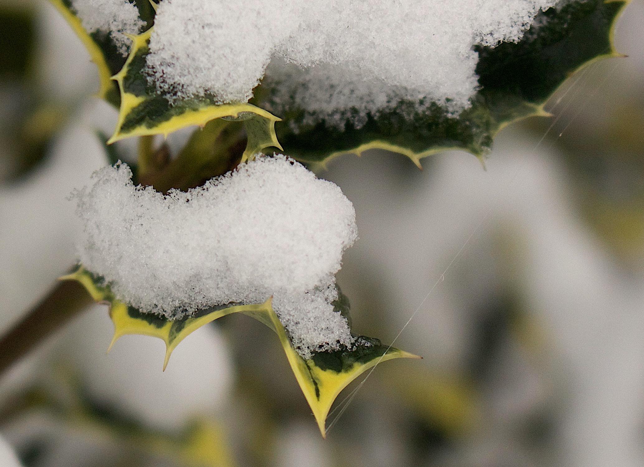 frozenthread