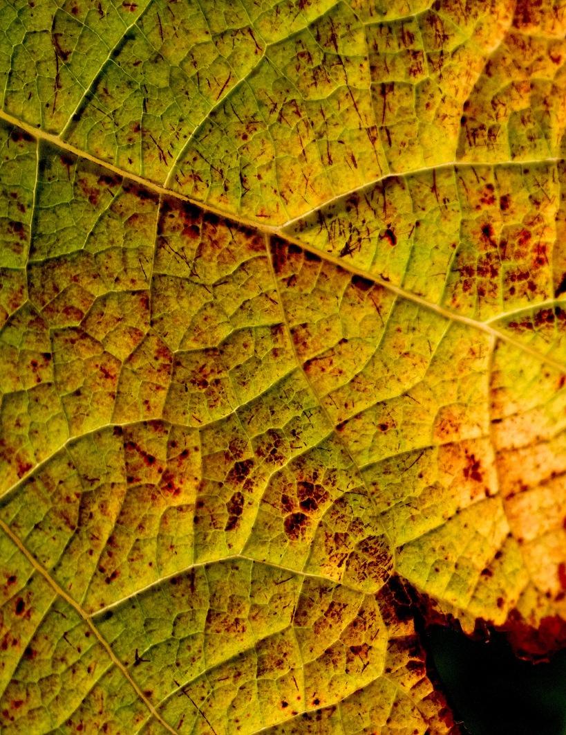 leaf212316