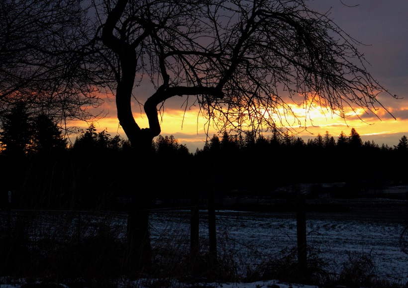 sunset1217163