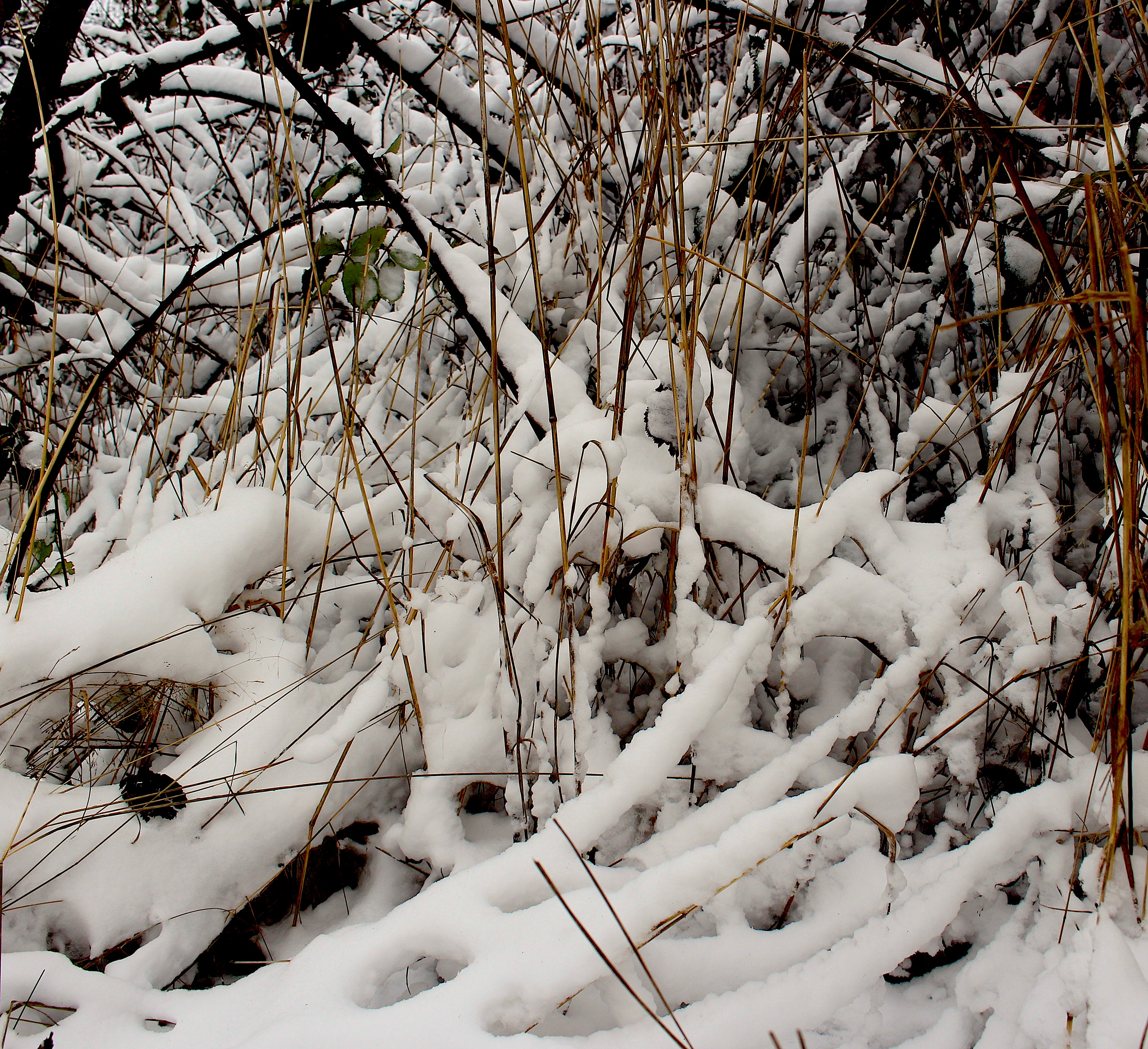 thicket1