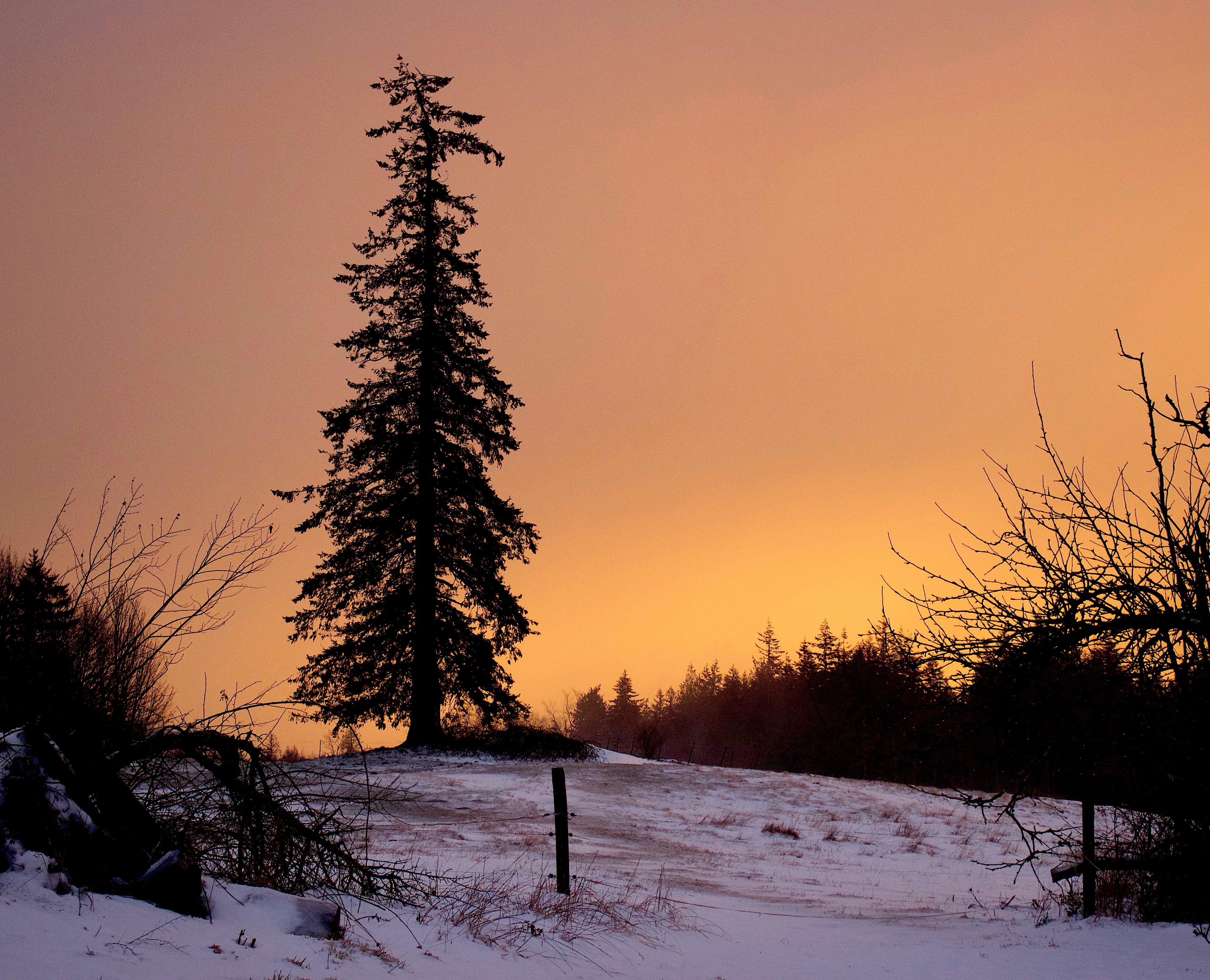 snowglow4