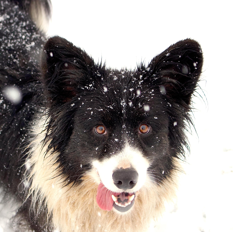 snowyhomer3