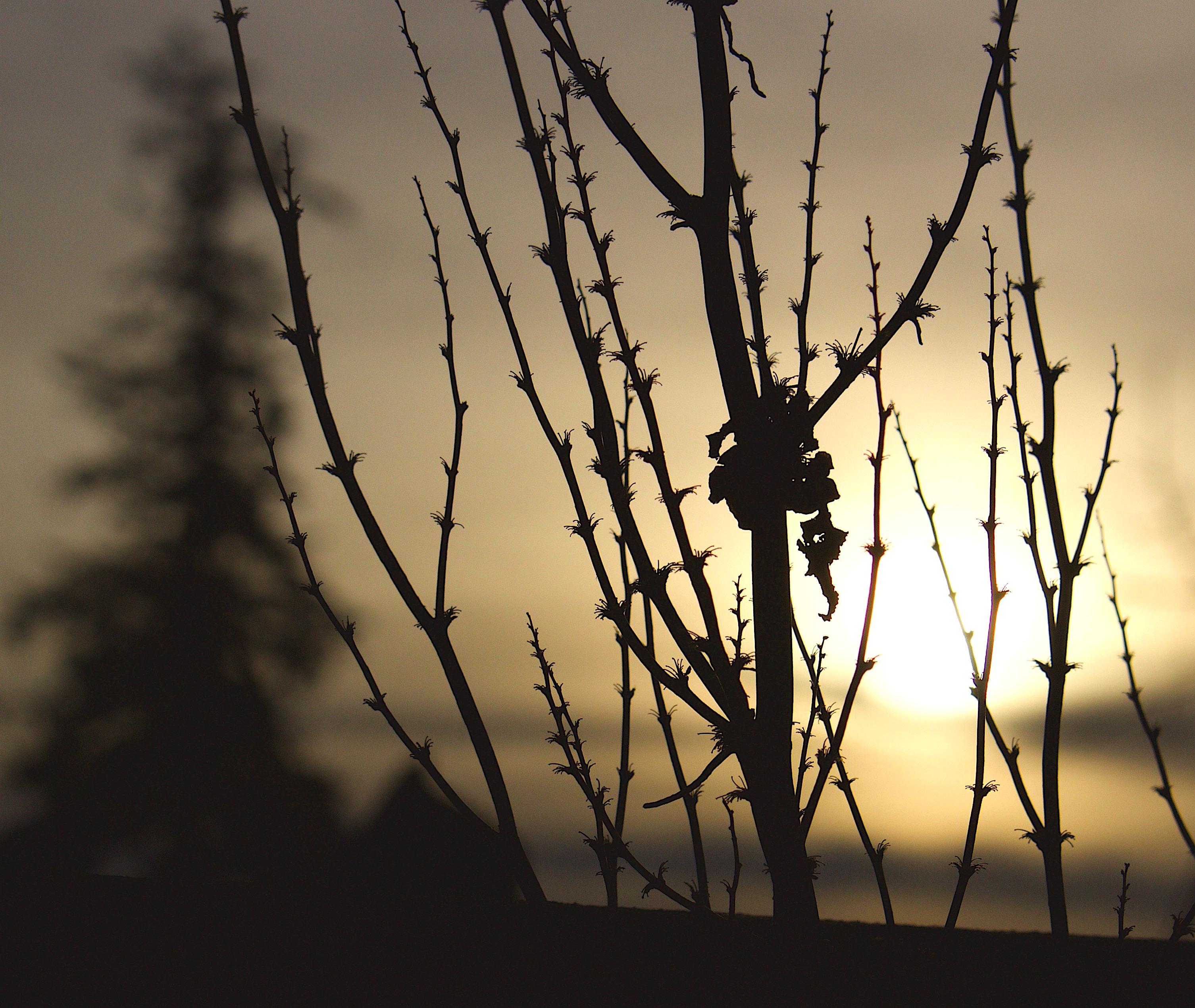 sunset114178