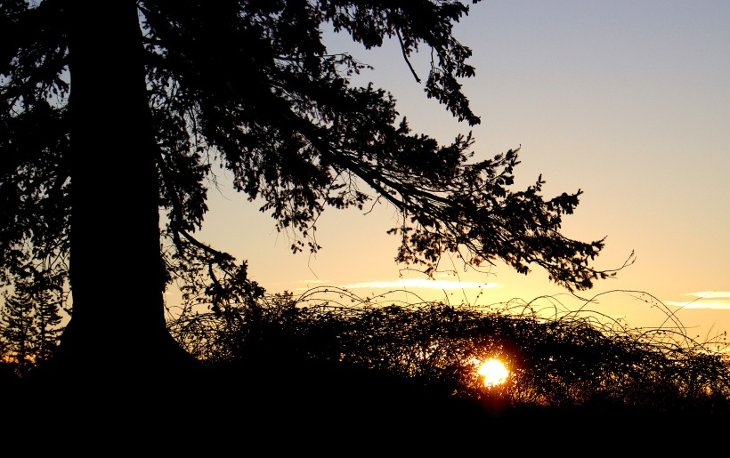 sunset1217