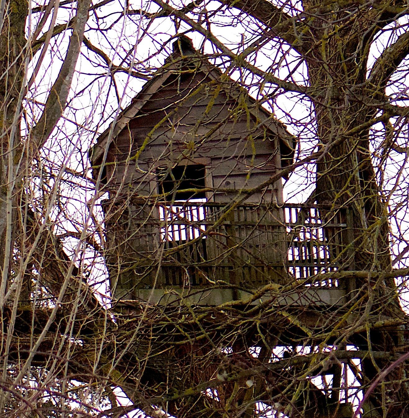 treehousejanuary