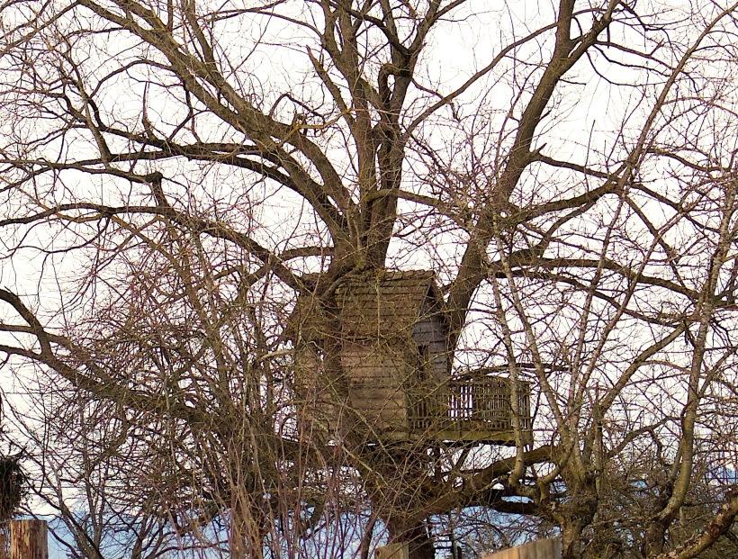 treehousejanuary2