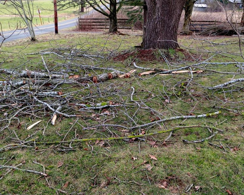 branchesdown