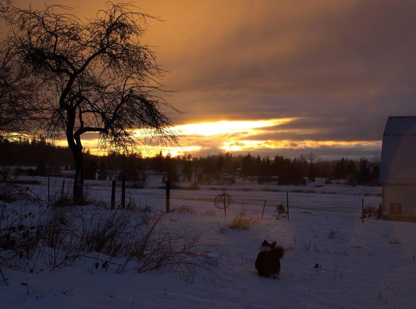 snowglow2