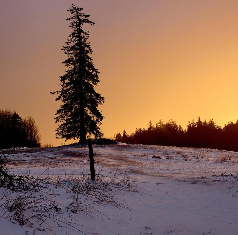 snowglow6