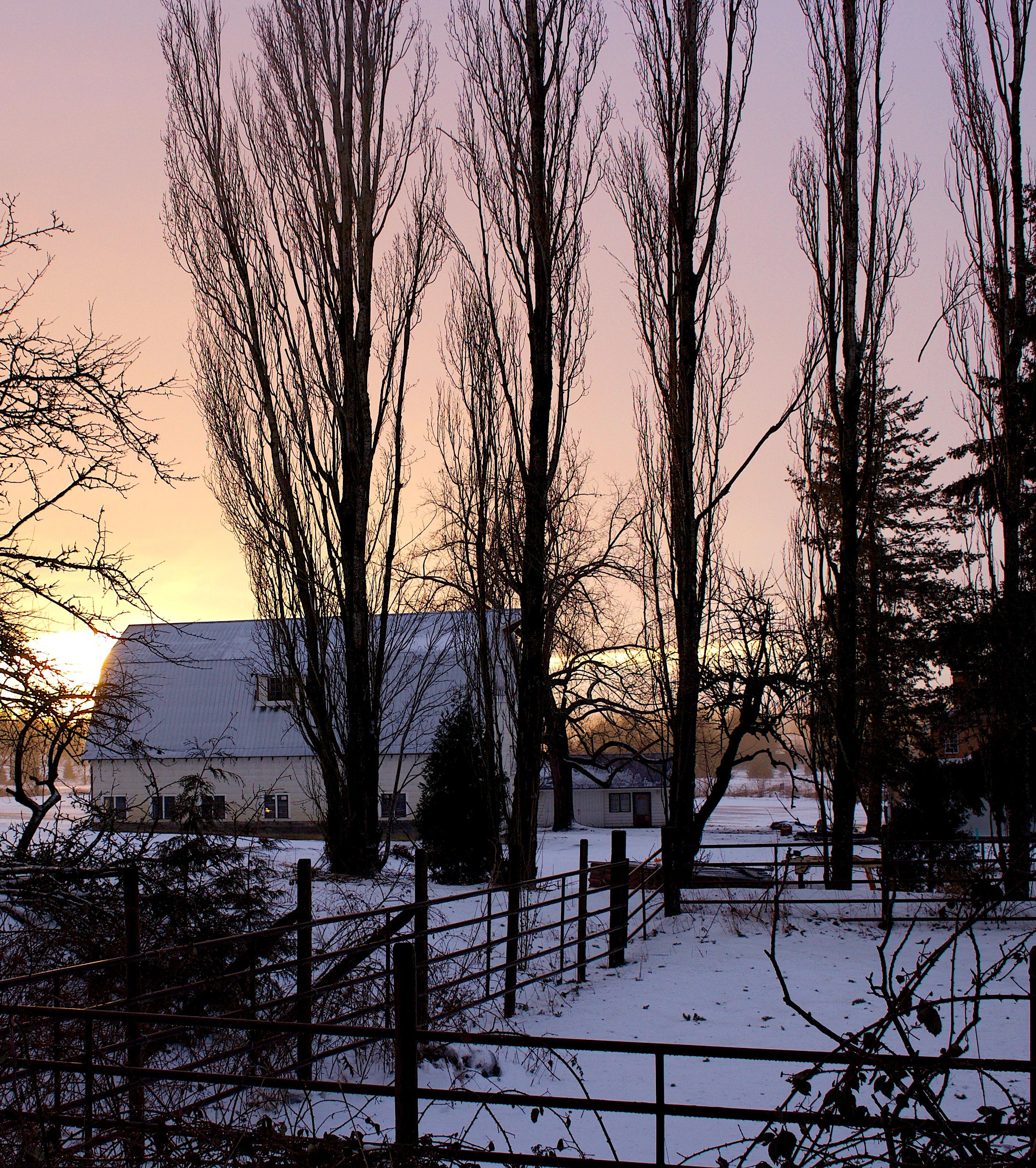 snowglowfarm2