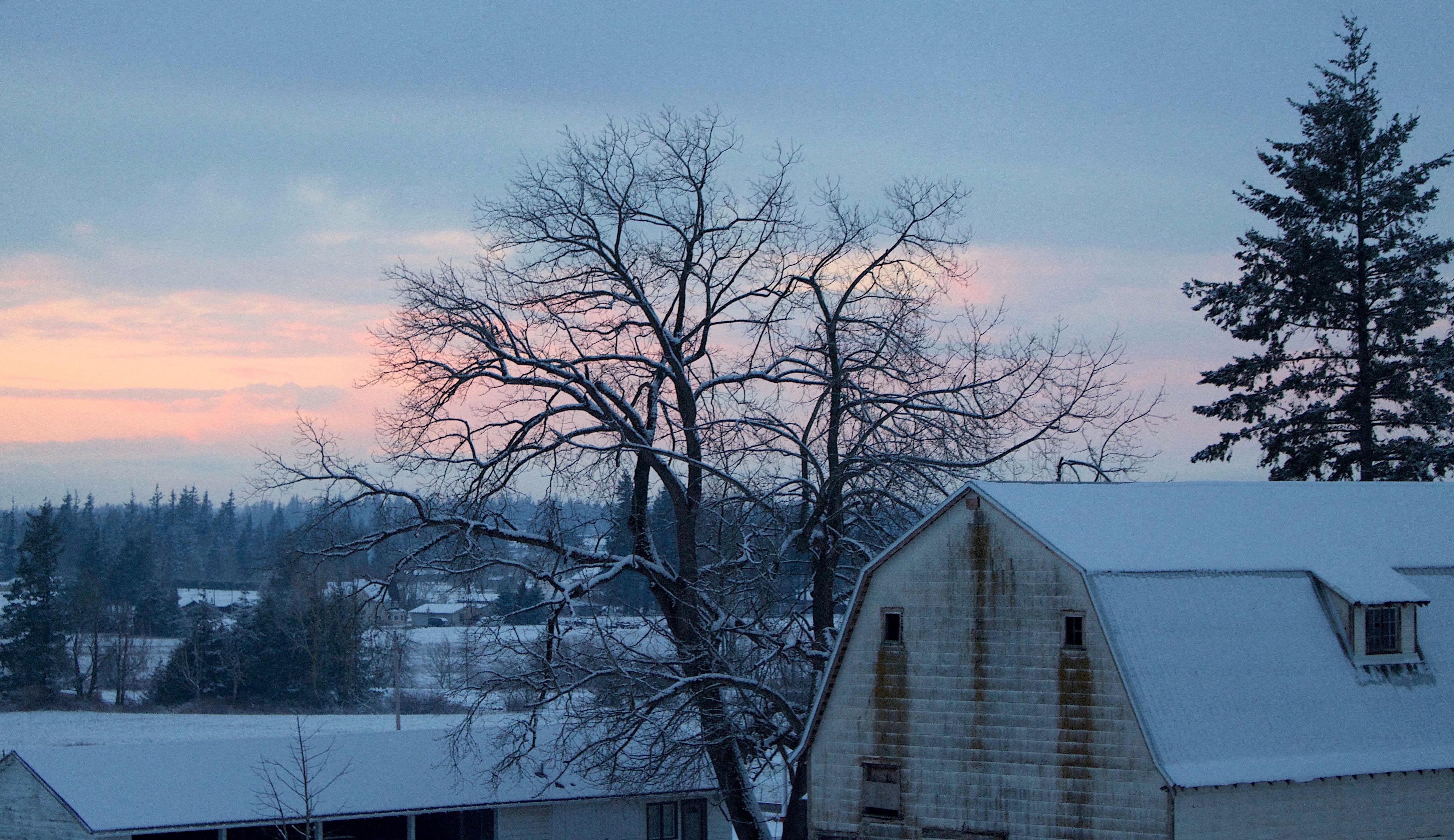snowywalnut3